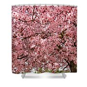 Tree Blossoms Pink Blossoms Art Prints Giclee Flower Landscape Artwork Shower Curtain