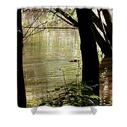 Tree Bowing To Swimming Beaver  Shower Curtain