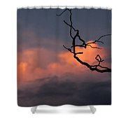 Tree Branch At Sunset Shower Curtain