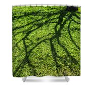 Tree Branch Shadow Shower Curtain