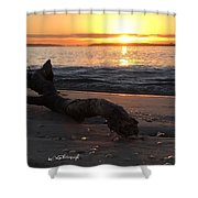 Tree Branche Shower Curtain