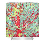 Tree Branches 8 Shower Curtain