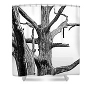 Tree Branches Shower Curtain