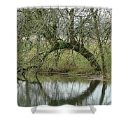 Tree Cannon Shower Curtain
