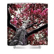Tree Canopy Red Shower Curtain