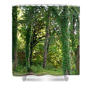 Tree Cathedral 2 Shower Curtain