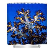 Tree Coral Shower Curtain