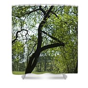 Tree Dali Shower Curtain