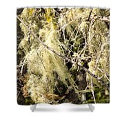 Tree Decorations Shower Curtain