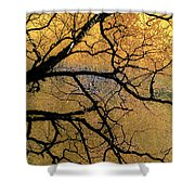 Tree Fantasy 7 Shower Curtain