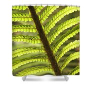 Tree Fern Frond Shower Curtain