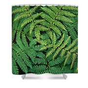 Tree Fern Fronds Shower Curtain