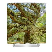 Tree For The Ages Shower Curtain
