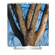 Tree Fork Shower Curtain