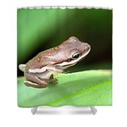 Tree Frog Close-up 01110 Shower Curtain
