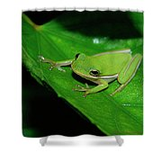 Tree Frog On Hibiscus Leaf Shower Curtain