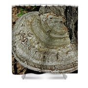 Tree Fungi Shower Curtain