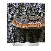 Tree Fungus 4 Shower Curtain