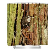 Tree Home Shower Curtain