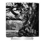 Tree I Shower Curtain