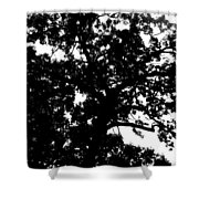 Tree In Black And White Shower Curtain