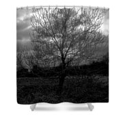 Tree In Field Shower Curtain