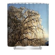 Tree In Ice Shower Curtain