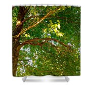 Tree In Late Summer Shower Curtain