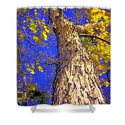 Tree In Motion Shower Curtain