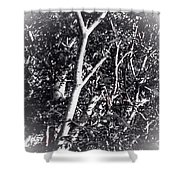 Tree In Summer In Black And White Shower Curtain