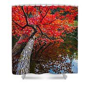 Tree In The Pond Shower Curtain
