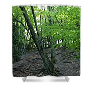 Tree In The Woods Shower Curtain