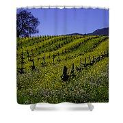 Tree  In Vineyards Shower Curtain