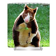Tree Kangaroo Shower Curtain