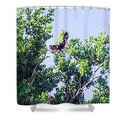 Tree Landing Shower Curtain