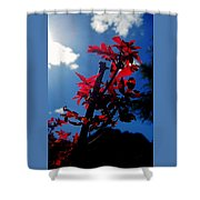 Tree Leaves Red 061814a Shower Curtain