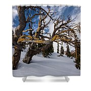 Tree Life In Winter Shower Curtain