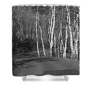 Tree Loop B And W Shower Curtain