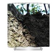 Tree Macro View Shower Curtain