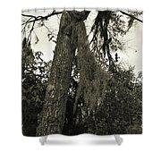 Tree Moss Shower Curtain