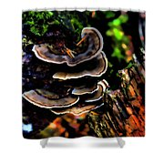 Tree Mushrooms Shower Curtain by David Patterson
