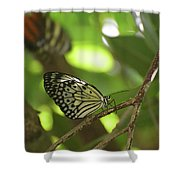 Tree Nymph Butterfly Sitting On A Tree Branch Shower Curtain