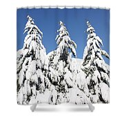 Tree-o Of Evergreens Shower Curtain