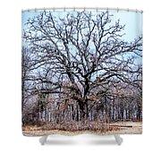 Tree Of Beauty Shower Curtain