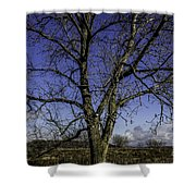 Tree Of Blue Shower Curtain