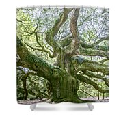 Tree Of History Shower Curtain