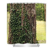 Tree Of Ivy Shower Curtain