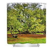 Tree Of Life 2 - Paint  Shower Curtain