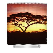 Tree Of Life Africa Shower Curtain
