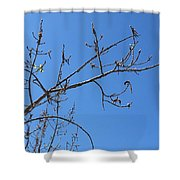 Tree Of New Life Shower Curtain